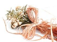 ξηρά λουλούδια Στοκ φωτογραφίες με δικαίωμα ελεύθερης χρήσης