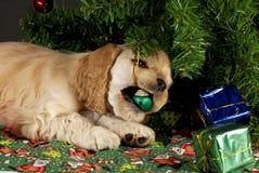 坏圣诞节小狗 库存图片