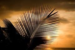 заход солнца Мальдивов Стоковая Фотография