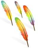 五颜六色的羽毛 免版税库存照片