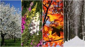 τέσσερις εποχές Στοκ Εικόνες