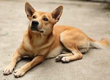 взволнованность собаки Стоковая Фотография