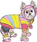 穿戴的狗约克夏 库存照片