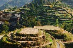 террасы риса фарфора Стоковое Фото