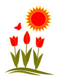 тюльпаны солнца Стоковые Изображения RF