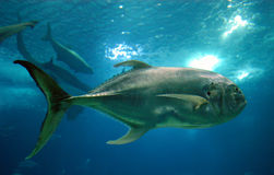 большие рыбы Стоковые Фото