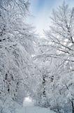 зима валов замороженной дороги идущая Стоковые Изображения