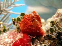 лягушка рыб рыболова Стоковое Изображение RF