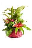 排列绿色植物 免版税库存照片