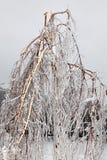 残破的冻雨风暴结构树 库存图片