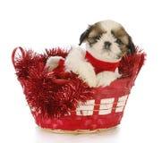 щенок рождества Стоковое фото RF