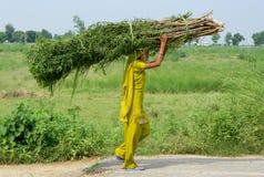 印第安村庄妇女 库存照片