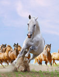 белизна лошади Стоковые Фото