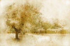 сбор винограда ландшафта Стоковое фото RF