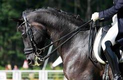 εκπαίδευση αλόγου σε π& Στοκ φωτογραφίες με δικαίωμα ελεύθερης χρήσης