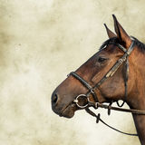 портрет лошади залива точный просто Стоковое Изображение