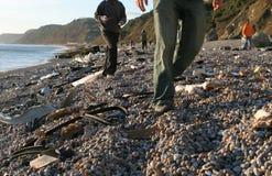 кораблекрушение пляжа Стоковая Фотография RF