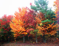 美丽的明亮的秋叶 库存图片