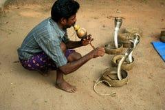 有魅力者印地安人蛇 免版税库存照片