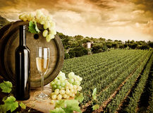 κρασί αμπελώνων Στοκ Φωτογραφία