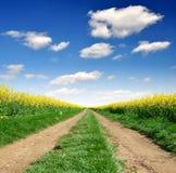 путь рапса поля Стоковая Фотография RF