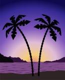 在日出(日落)的棕榈树 图库摄影