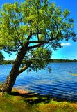 倾斜的结构树 库存照片