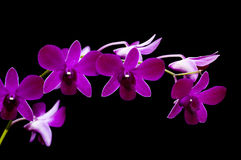 兰花紫色 图库摄影