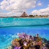 坎昆珊瑚玛雅墨西哥礁石里维埃拉 库存照片