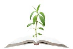 书结构树 免版税图库摄影