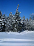 зима снимка Стоковые Изображения