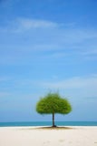 单独海滩绿色结构树 库存图片