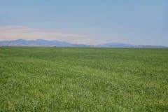 俯视牧场地的绿色山 免版税库存照片