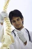 按摩脊柱治疗者医生 库存照片