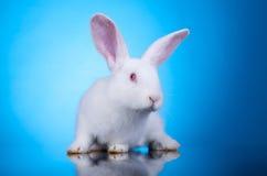 好奇的兔宝宝一点 免版税库存照片