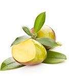манго Стоковое Изображение