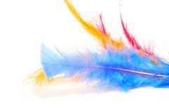 Ζωηρόχρωμα φτερά Στοκ Εικόνα