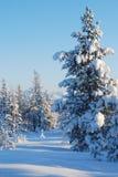 древесина зимы Стоковое фото RF