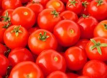 томаты вишни Стоковые Фотографии RF