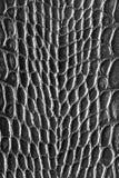 μαύρο δέρμα τραχύ Στοκ φωτογραφία με δικαίωμα ελεύθερης χρήσης