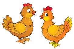 κότες Στοκ εικόνες με δικαίωμα ελεύθερης χρήσης