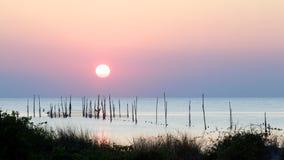 在日落的海湾切塞皮克犬 库存照片