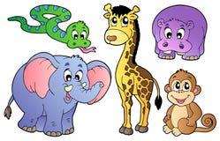 非洲动物逗人喜爱的集 免版税库存图片