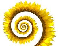 成螺旋形向日葵 图库摄影