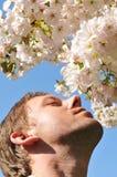 сено лихорадки Стоковая Фотография RF