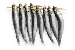 鲥鱼干食物日语半 库存图片