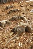 砍伐森林 库存图片