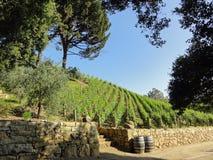 美丽的加利福尼亚葡萄园 免版税库存照片