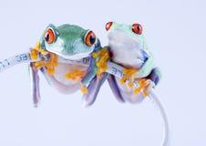 сеть лягушки Стоковые Фото