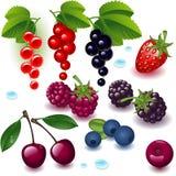 полный набор ягоды Стоковое Фото